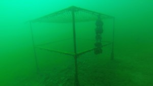 Chain link dive platform